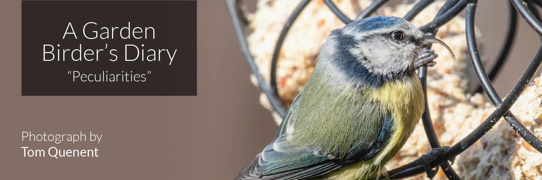 A Garden Birder's Diary – Peculiarities