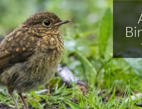 A Garden Birder's Diary – Young Ones