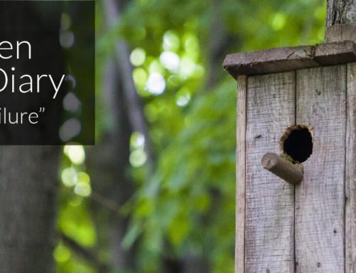 A Garden Birder's Diary – Nest Box Failure
