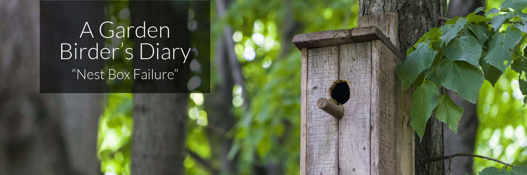 A Garden Birder's Diary – Nest Box Failure