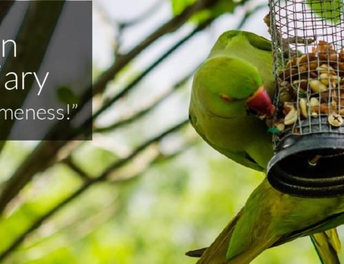A Garden Birder's Diary – Urban Birds and Tameness