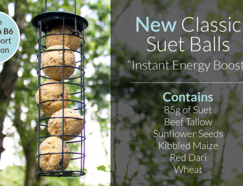 The Benefits of Feeding Our New Classic Suet Balls
