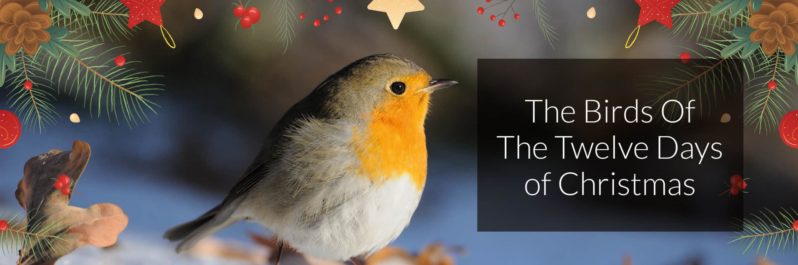 The Birds of The Twelve Days of Christmas