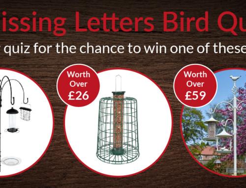 Missing Letters Bird Quiz