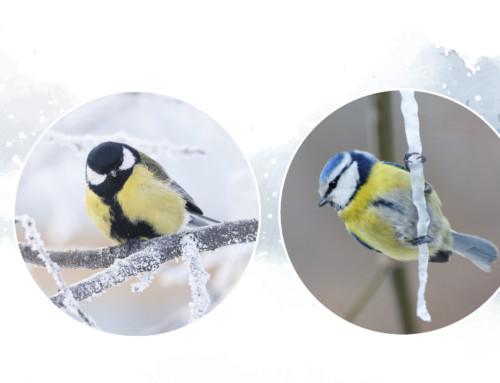 How Garden Birds Keep Warm Throughout Winter