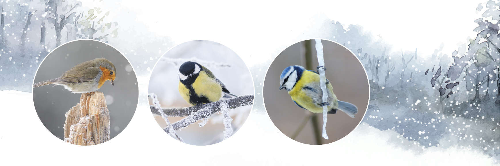 How Garden Birds Keep Warm Throughout Winter
