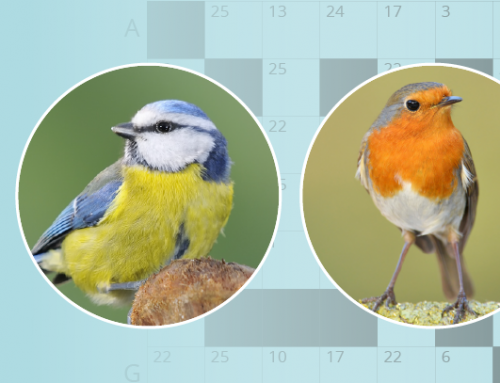 Birdword Autumn Quiz (ends 31st December 2020)