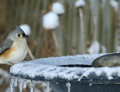 4 Ways to Make Sure Your Bird Bath is Safe