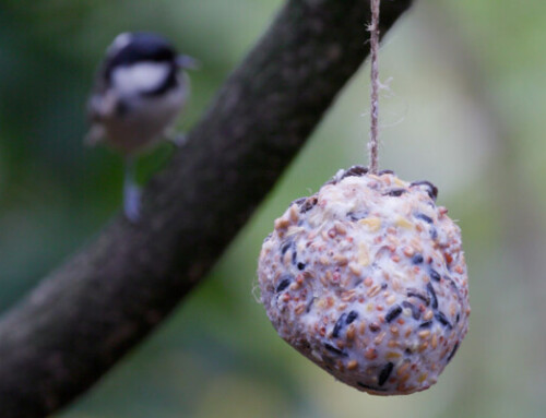 Fat Balls For Birds